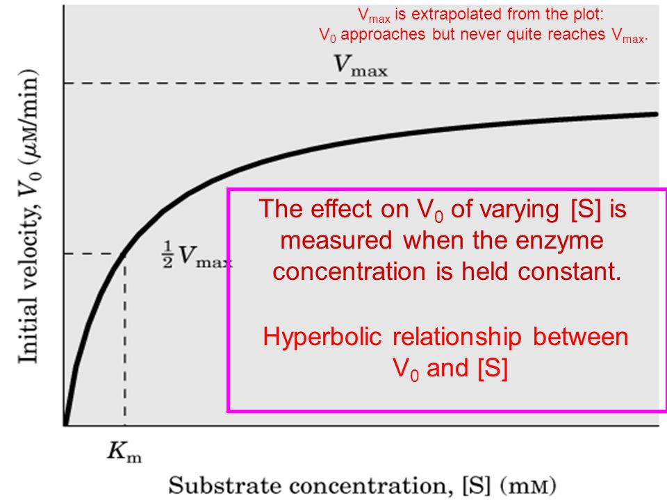 The effect on V0 of varying [S] is measured when the enzyme